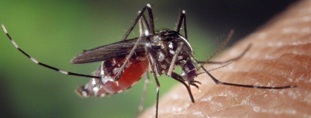 Уничтожение комаров: каких профессиональных рисков ждать?