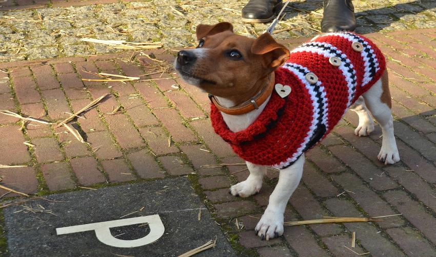 швейное производство для собак
